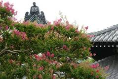 090801本覚寺サルスベリ