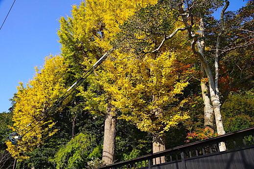 201116川喜多映画記念館紅葉