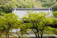 160411円覚寺新緑4