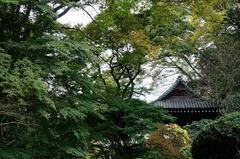 151118妙本寺にて1