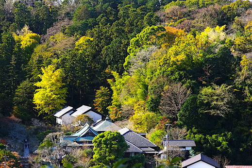 201128円覚寺からの東慶寺