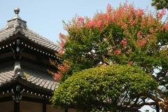 100724本覚寺サルスベリ2