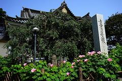 190730妙隆寺フヨウ2