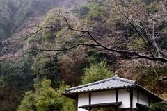 100306円覚寺雨2