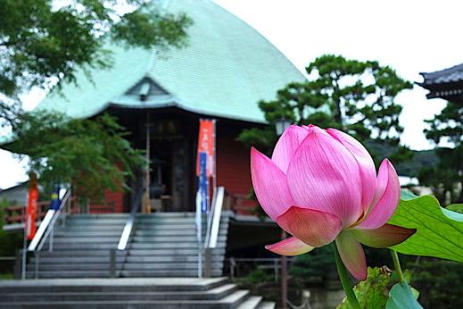 200730本覚寺ハス