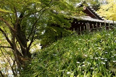 110413妙本寺新緑