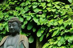 120607東慶寺イワタバコ3