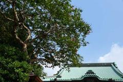 130814龍口寺サルスベリ2