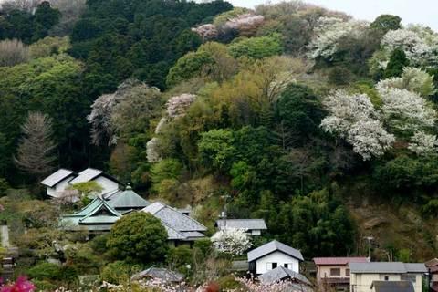 100407円覚寺から東慶寺