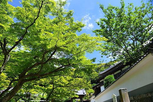 190603円覚寺新緑