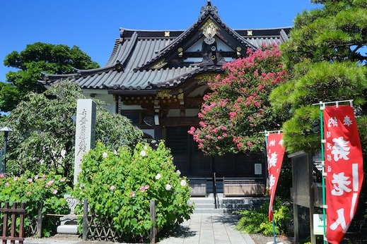 140820妙隆寺サルスベリ1