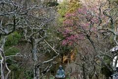 100123東慶寺ウメ1