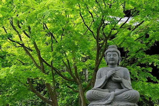 170427長谷寺新緑