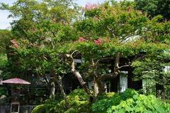110806海蔵寺