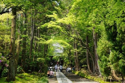 120508寿福寺新緑