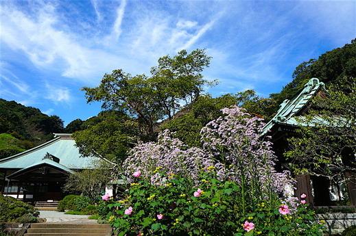 161006海蔵寺シオン