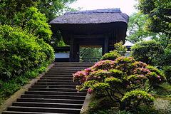190603円覚寺帰源院サツキ