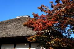 201114円覚寺紅葉2