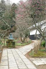東慶寺ウメ