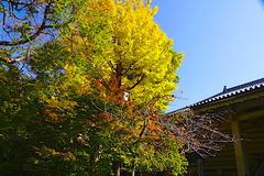 201116八幡宮紅葉2