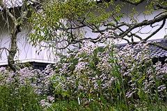 201007東慶寺シオン