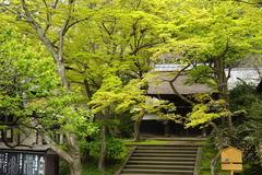 160411円覚寺新緑3