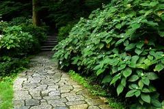 140829瑞泉寺タマアジサイ2