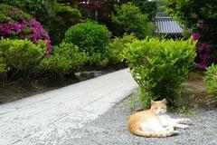 140508浄妙寺ネコ