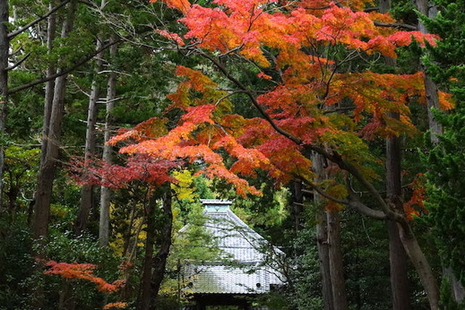 151207寿福寺紅葉