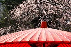 160228海蔵寺シダレウメ2