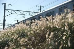 091103横須賀線ススキ