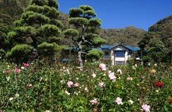 121019鎌倉文学館バラ