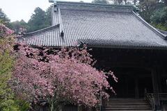 160404妙本寺カイドウ1