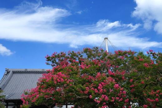 150810本興寺サルスベリ