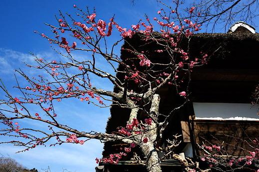 180218海蔵寺コウバイ