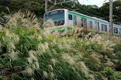 151018横須賀線沿線ススキ