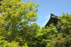 180416建長寺新緑
