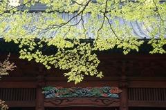 150404妙本寺新緑