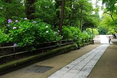 170626円覚寺アジサイ2