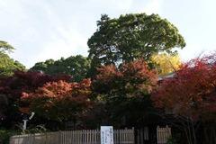 101201鎌倉宮紅葉3