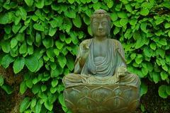 130515東慶寺イワタバコ