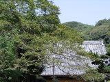 060902円久寺サルスベリ