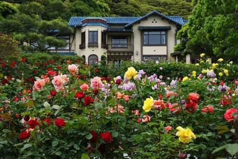 100519鎌倉文学館バラ