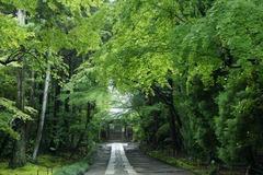 110528寿福寺新緑