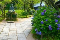 170703東慶寺アジサイ1