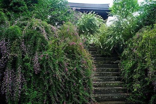 150927海蔵寺ハギ