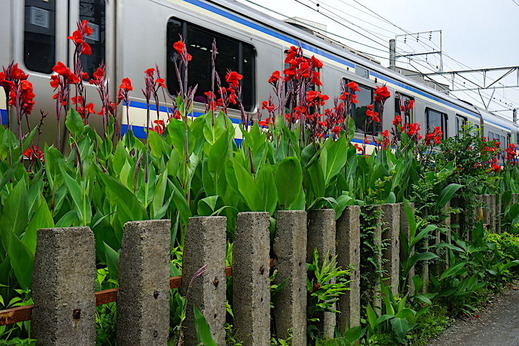 190724横須賀線カンナ