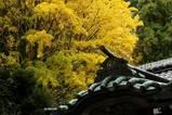 061123八雲神社黄葉