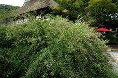 130911海蔵寺ハギ2