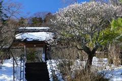 140216東慶寺ウメ